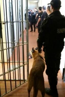 Mais de 25 estabelecimentos desde o início do ano foram revistados pelos agentes penitenciários